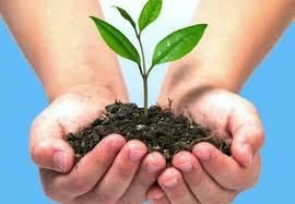 plata-medio-ambiente