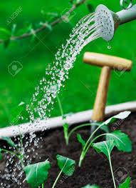 riego-en-plantas